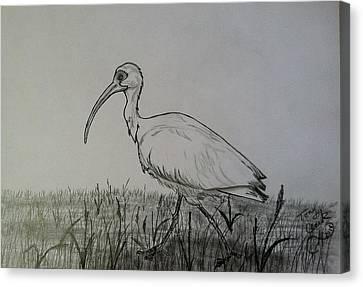 White Ibis Canvas Print by Tony Clark