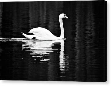 White In Black  Canvas Print