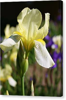 White Iris 2 Canvas Print by Bruce Bley