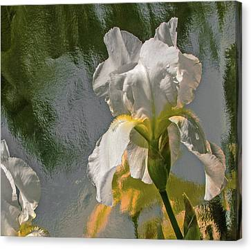 White Iris Canvas Print by Don Spenner