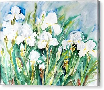 White Irises Canvas Print by Alexandra Maria Ethlyn Cheshire