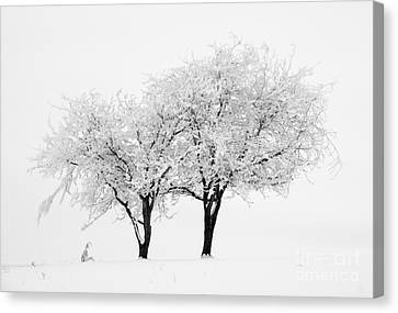White Lace Canvas Print by Mike Dawson