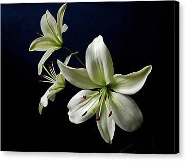 White Lilies On Blue Canvas Print by Sandy Keeton