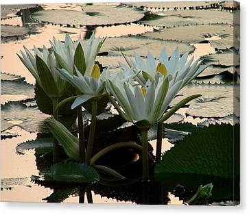 White Lillies Canvas Print by Kimberly Camacho