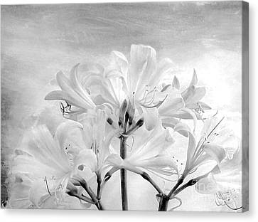 White Lillies Canvas Print by Marsha Heiken