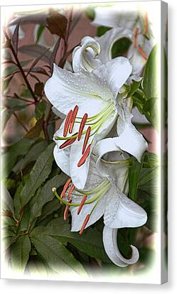 White Lily Canvas Print by Dennis Lundell