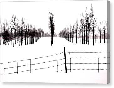 White Lines Fenced In  Canvas Print by Russell Styles
