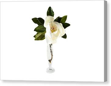 White Magnolia Flower And Leaves Isolated On White  Canvas Print by Michael Ledray