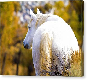 White Mustang Mare Canvas Print