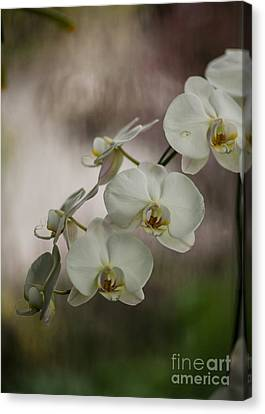 Orchids Canvas Print - White Of The Evening by Mike Reid
