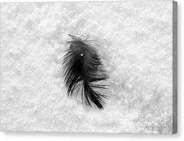 White On Black And White Canvas Print by Dean Harte