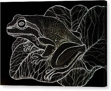 White On Black Frog Canvas Print by Nick Gustafson