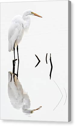White On White Canvas Print