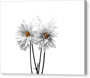 White On White Canvas Print by Regina Arnold