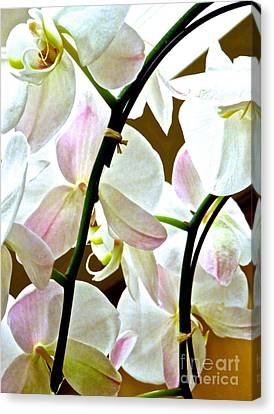 White Orchid 11 Canvas Print by Ken Lerner