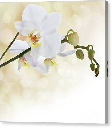 White Orchid Flower Canvas Print by Pics For Merch