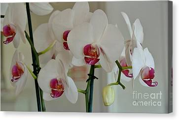White Orchid Mothers Day Canvas Print by Marsha Heiken