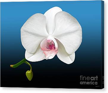White Orchid Canvas Print by Rand Herron