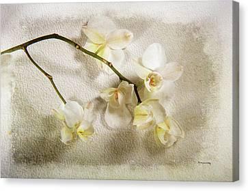 White Orchid Canvas Print by Randi Grace Nilsberg