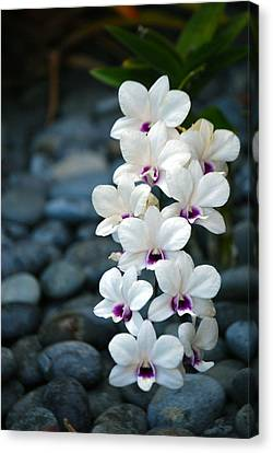 Canvas Print featuring the photograph White Orchids by Debbie Karnes