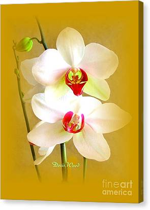 White Orchids Canvas Print by Doris Wood