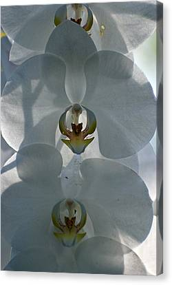 Canvas Print featuring the photograph White Orchids  by Teresa Blanton