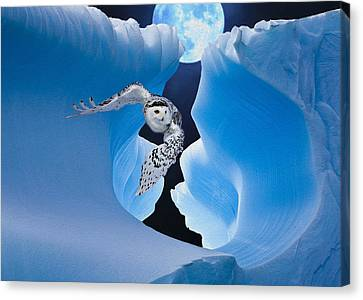 White Owl Canvas Print by Jack Zulli