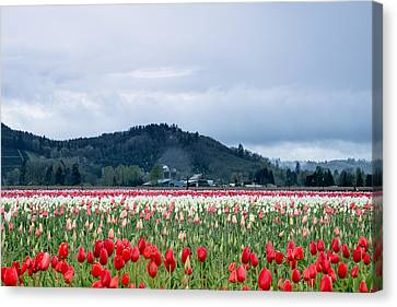 White Pass Highway With Tulips Canvas Print by E Faithe Lester