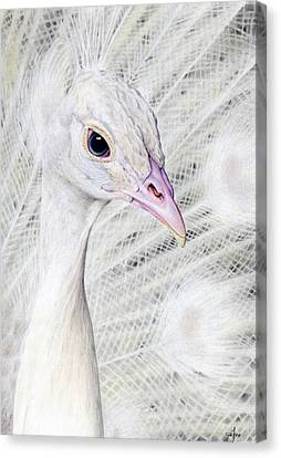 white Peacock Canvas Print by MaryJane FineArt