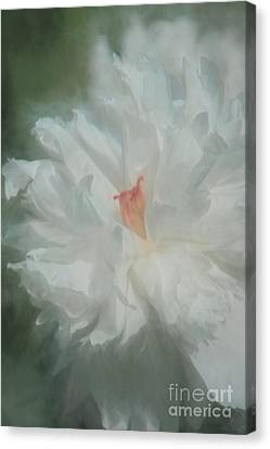 Canvas Print featuring the photograph White Peony by Benanne Stiens