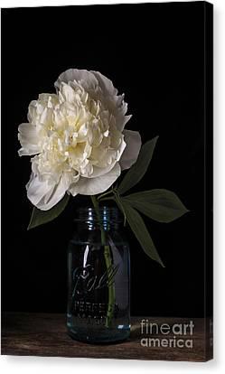 White Peony Flower Canvas Print by Edward Fielding