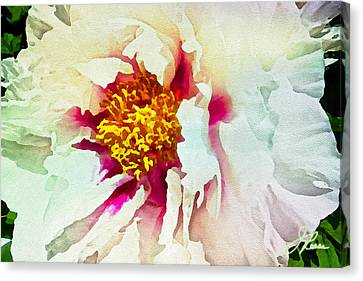 Canvas Print featuring the painting White Peony by Joan Reese