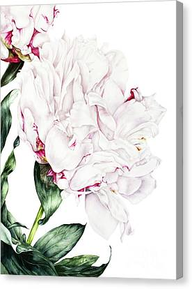 White Peony Canvas Print by Marie Burke