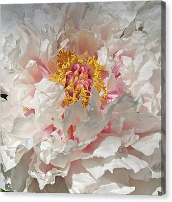 Canvas Print featuring the photograph White Peony by Sandy Keeton