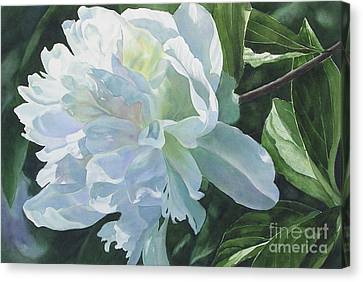 White Peony Canvas Print by Sharon Freeman