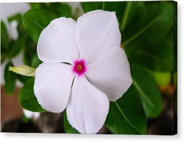 White Periwinkle Flower 1 Canvas Print by Lanjee Chee