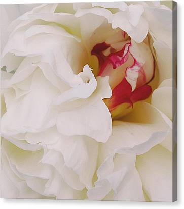 White Petals Canvas Print by Michael Peychich