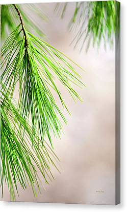 Canvas Print featuring the photograph White Pine Branch by Christina Rollo