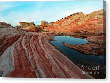 White Pocket Oasis Canvas Print by Mike Dawson