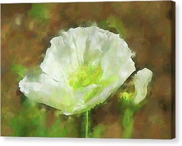 White Poppy 1 Impression  Canvas Print by Linda Brody