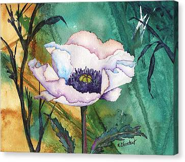 White Poppy On Teal Canvas Print by Renee Chastant