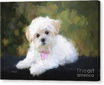 House Pet Canvas Print - White Puppy  by Garland Johnson