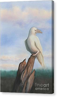 White Raven Canvas Print by Anne Havard