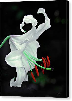 White, Red And Green Lily Canvas Print