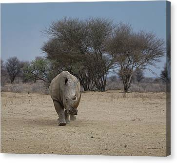 White Rhino 1 Canvas Print