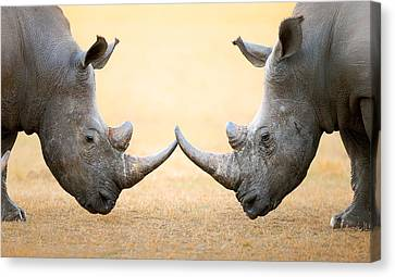 Touching Canvas Print - White Rhinoceros  Head To Head by Johan Swanepoel