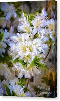 White Rhododendron Canvas Print