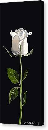 White Rose Canvas Print by Darrell Hopkins