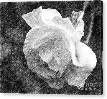 Canvas Print featuring the drawing White Rose In Pencil by Smilin Eyes  Treasures