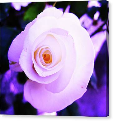 White Rose Canvas Print by Mary Ellen Frazee
